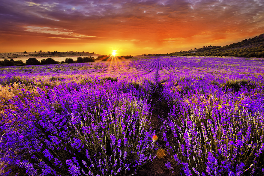 There is scientific evidence to support the health benefits of lavender essential oil